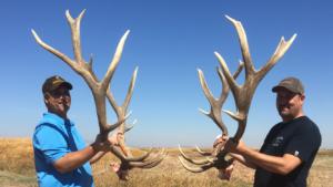 MossBack California Tule Elk
